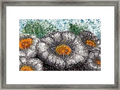 White Saguaro Cactus Blossom Framed Print by Cynthia Ann Swan