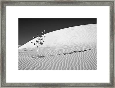 White Sands 4 Framed Print