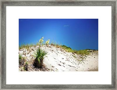 White Sands And Yucca Plant Framed Print by Colleen Kammerer