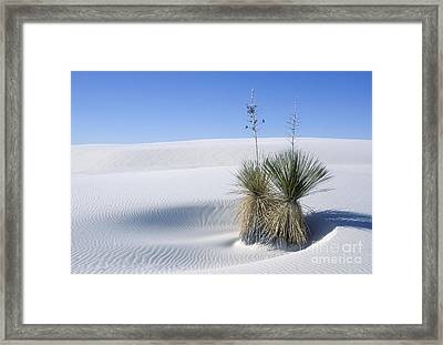 White Sands Dune And Yuccas Framed Print by Sandra Bronstein