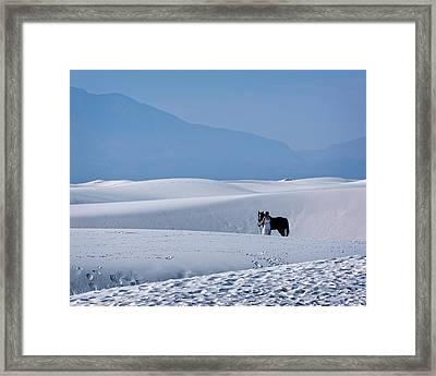 White Sands Horse And Rider #5b Framed Print