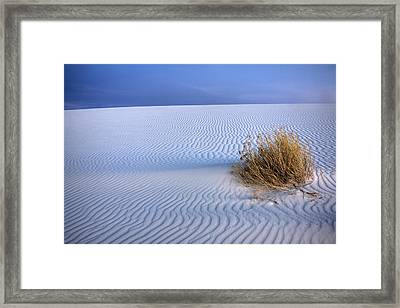White Sands Scrub Framed Print by Peter Tellone
