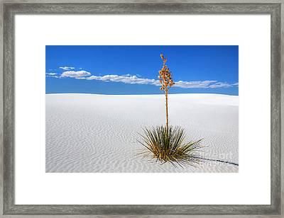 White Sands Yucca Framed Print