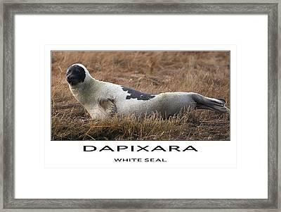 White Seal  Framed Print by Dapixara Art