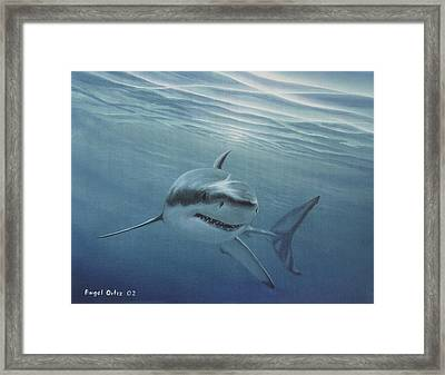White Shark Framed Print by Angel Ortiz