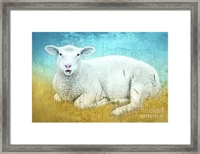White Sheep Framed Print