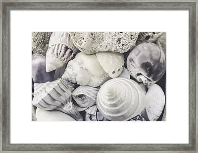 White Shells Framed Print by Colleen Kammerer
