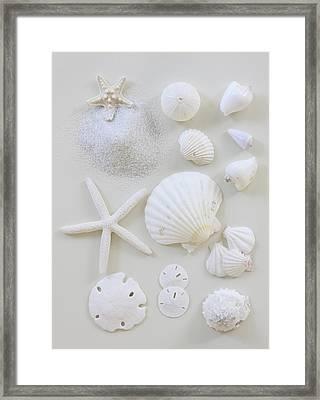 White Shells Framed Print by Daniel Hurst Photography