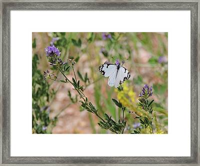 White-skipper On Lupine Framed Print