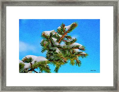 White Snow On Evergreen Framed Print