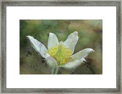 White Spring Flower With Leaves Texture Framed Print
