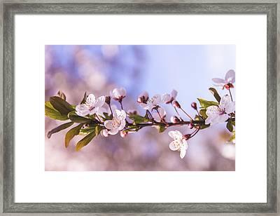 White Spring Flowers Framed Print by Thubakabra