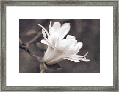 Framed Print featuring the photograph  White Star Magnolia Blossom by Jennie Marie Schell