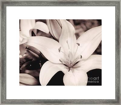White Stargazer Lily Framed Print by Mindy Sommers