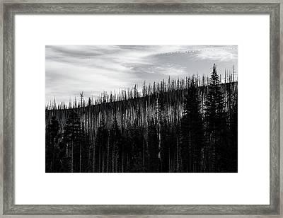 White Stripe Framed Print