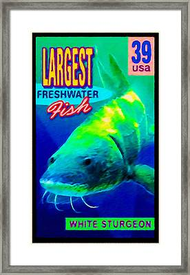 White Sturgeon Framed Print