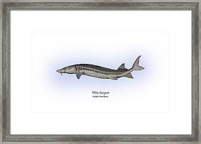 White Sturgeon Framed Print by Ralph Martens