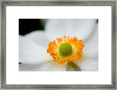 White Summer Framed Print by Terry Elniski