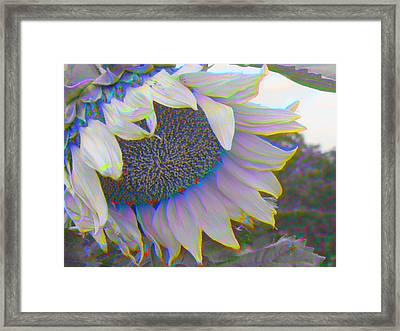 White Sunflower Framed Print by Vicky Brago-Mitchell