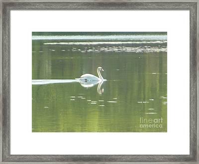 White Swan Silhouette Framed Print