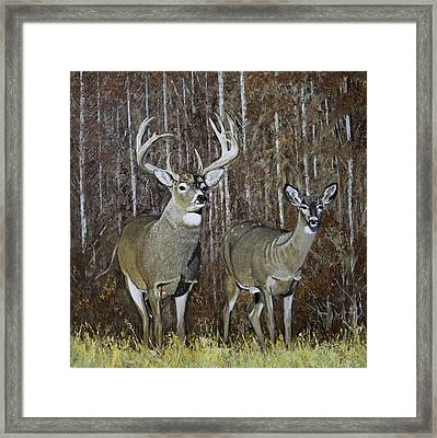 White Tail Couple 24x 24x3/4 Inch Oil On Canvas Framed Print by Manuel Lopez