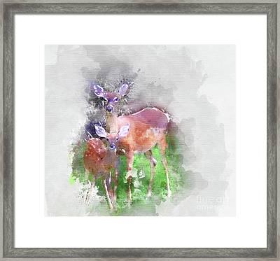 White Tail Deer In Watercolor Framed Print