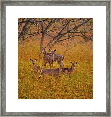 It's A Family Affair  Framed Print