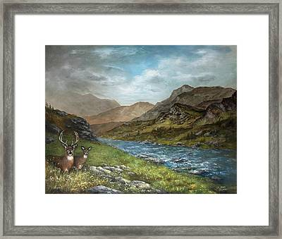 White Tail Meadow Framed Print by David Jansen