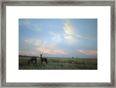 White-tailed Deer On The Prairie Framed Print by Joel Sartore
