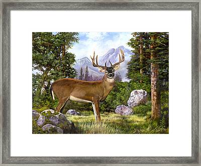 White Tailed Deer Framed Print by Robert May