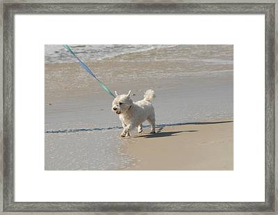 White Terrier Framed Print by Joyce StJames