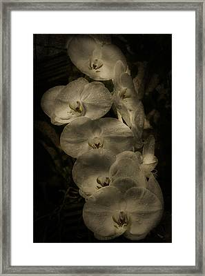 Framed Print featuring the photograph White Textured Flowers by Ryan Photography