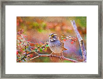 White Throated Sparrow - Digital Paint Framed Print by Debbie Portwood