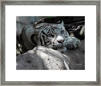 White Tiger Contiplation Framed Print