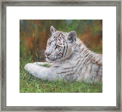 White Tiger Cub 2 Framed Print by David Stribbling