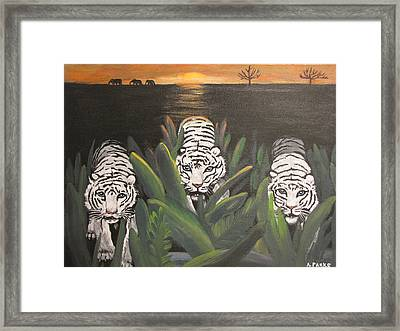White Tiger Encounter Framed Print