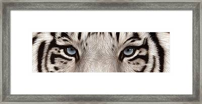 White Tiger Eyes Framed Print