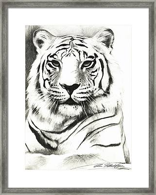 White Tiger Portrait Framed Print by Lin Petershagen