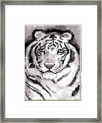 White Tiger Framed Print by Terry Groehler