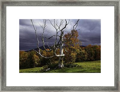 White Tree Framed Print by Garry Gay