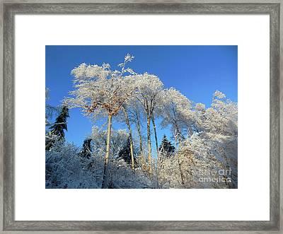 White Trees Clear Skies Framed Print