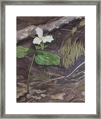 White Trillium  Framed Print by Debbie Homewood