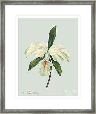White Trumpet Orchid Framed Print by Meridith Martens
