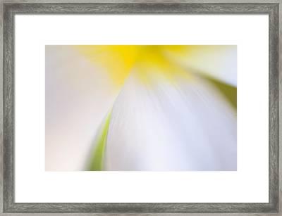 White Tulip Detail Framed Print by Silke Magino