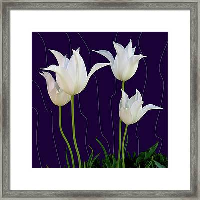 White Tulips For A New Age Framed Print