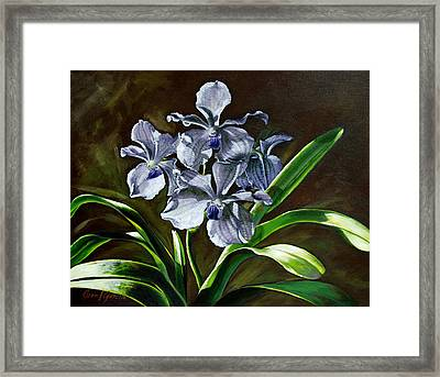 Morning Vanda Framed Print