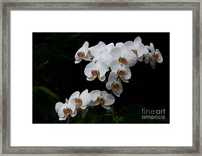 White Velvet Framed Print by Joanne Smoley