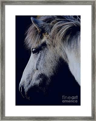 White Viking  Framed Print