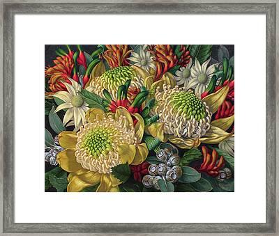 White Waratahs Flannel Flowers And Kangaroo Paws Framed Print