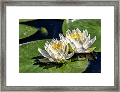 White Water Lilies Framed Print